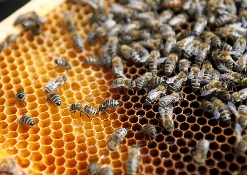 Ethiopia is Africa's largest honey consumer and producer. (Pic: Reuters)