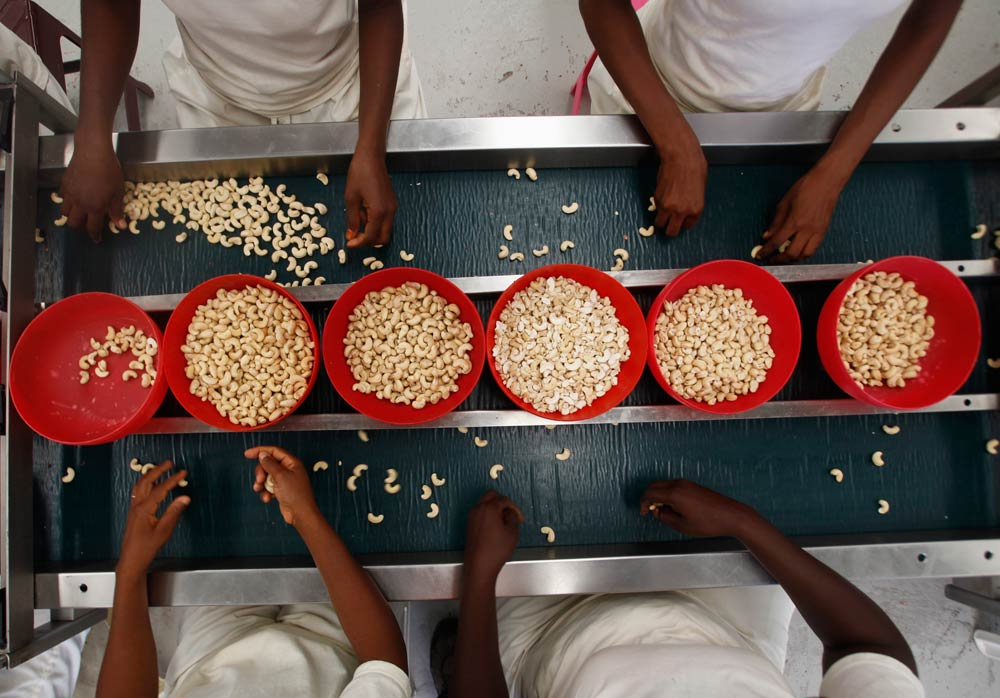Workers handle cashew nuts at a processing plant in Bouake. (Pic: Reuters)